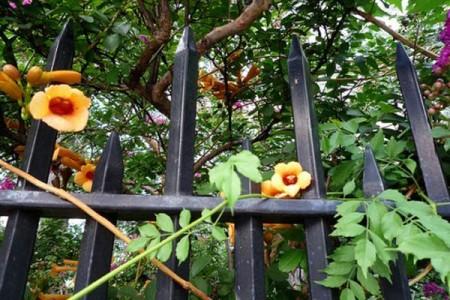 Нью-Йорк превращается в город-сад